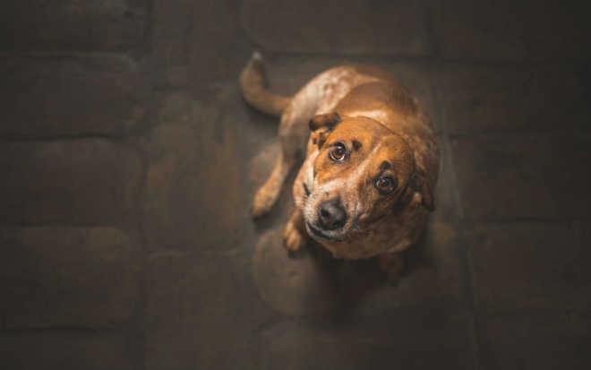 Maioria dos tutores de animais diz que os abandonaria em caso de mudança