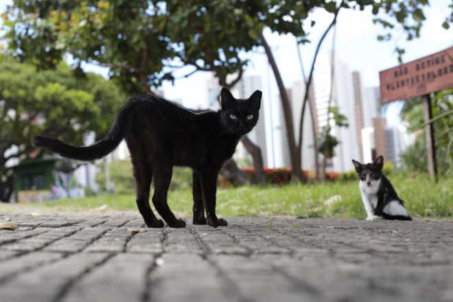 Fortaleza (CE) terá atendimento veterinário itinerante a partir desta quarta-feira