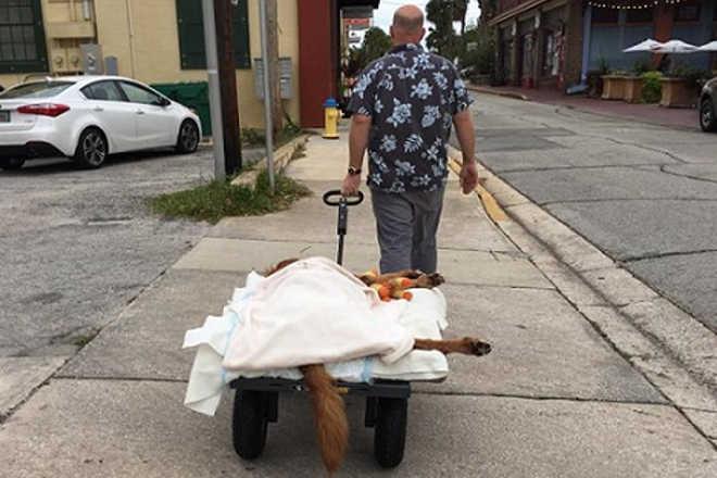 Tutor não deixa câncer de cão impedir o pet de passear