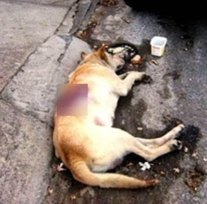 """Cão é abusado sexualmente e descartado na rua. Meses depois, essa foi a sua """"vingança""""…"""