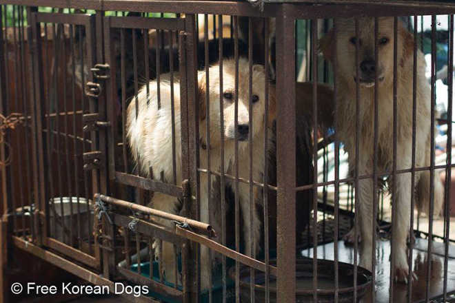 Pessoas cruéis venderam seus cães para o comércio de carne. Então algo incrível aconteceu…