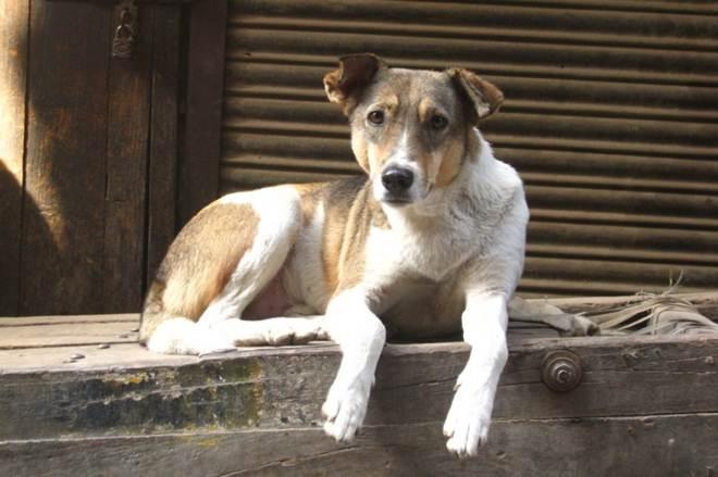 Projetos de lei querem proibir eliminação de cães e gatos em centros de zoonoses