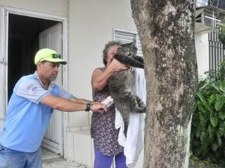Mais de 28 mil cães e gatos são vacinados contra raiva em Vitória, ES