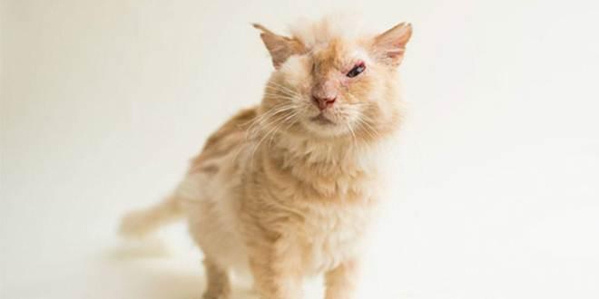 Pessoas jogam ácido no rosto de um gato, mas ele continua amando e confiando nas pessoas