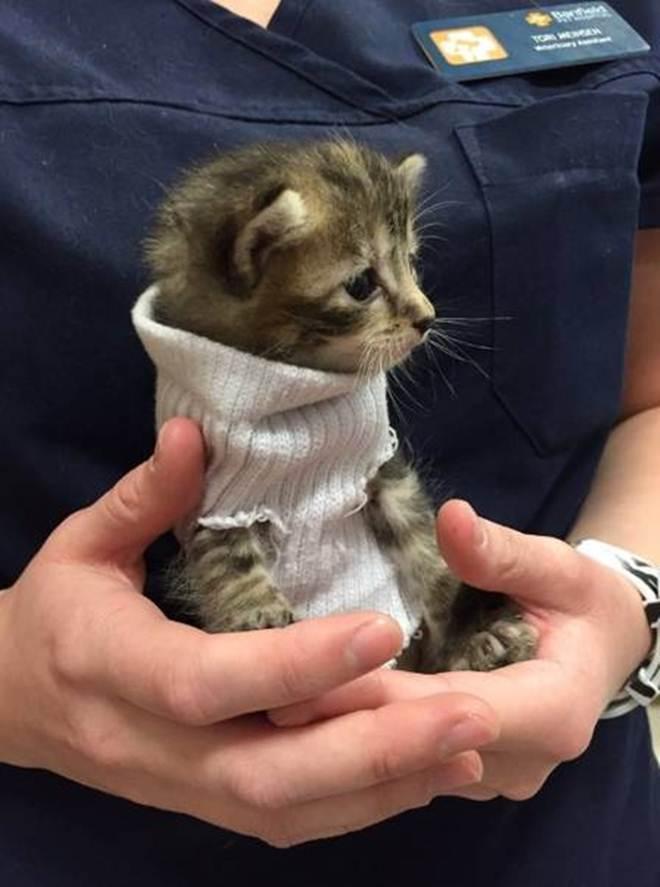 O gatinho foi resgatado após o furacão Foto: Reprodução do Twitter Leia mais: http://extra.globo.com/noticias/animais/gatinho-sobrevivente-do-furacao-matthew-resgatado-ganha-roupinha-20270403.html#ixzz4MoseAMGd