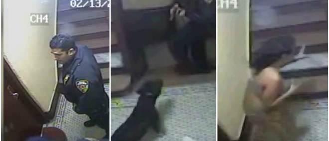 Investigação policial acusa agente de matar cão a tiro nos EUA