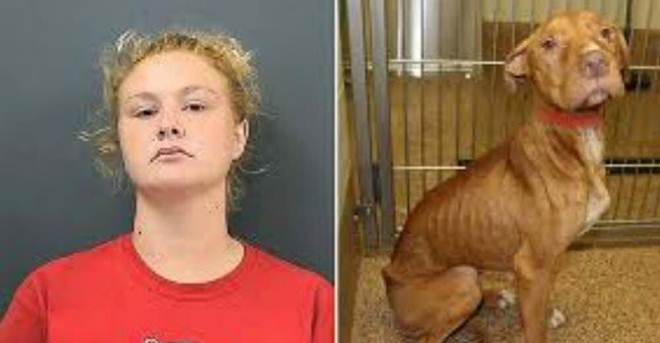 Mulher que maltratava seus cães severamente é proibida de ter novos cães pelo resto da vida