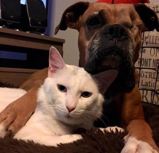 Cão que perdeu um olho e gato que sofria maus-tratos se tornam melhores amigos