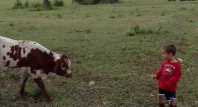 Bezerro encontra bebê pela primeira vez… Este vai derreter seu coração!