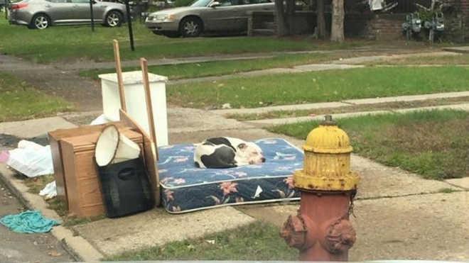 Cachorro é abandonado pela família após mudança e passa um mês na rua