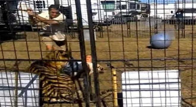 VÍDEO: tigre ataca treinadora durante apresentação em feira de entretenimento
