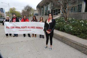 Karem Belalcazar junto dos manifestantes do New York Animal Rights Alliance do lado de fora do tribunal. O ex-namorado de Belalcazar, Carlos Hernandez, é acusado de matar o cachorrinho em um ataque de ciúmes.