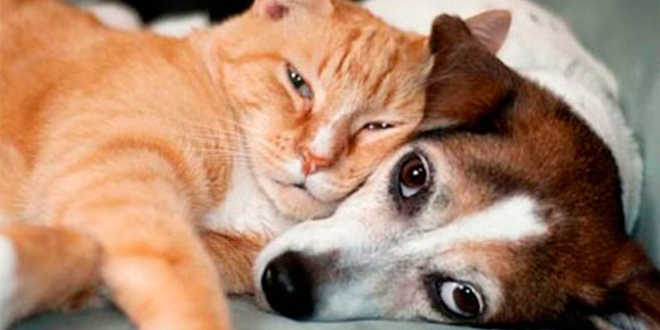 Internet se revolta após meninas torturarem cães e gatos e postarem vídeos nas redes sociais