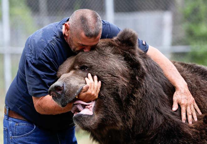 Cumplicidade entre urso e cuidador emociona a internet