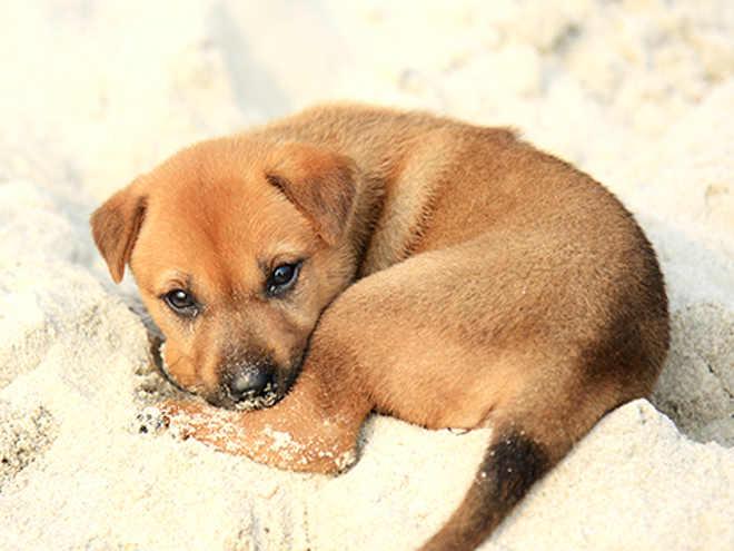 Noivo regressa da despedida de solteiro com oito cães que estavam perdidos no mato