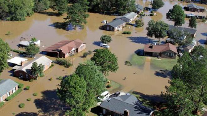 Voluntários invadem casas para salvar animais vítimas de furacão