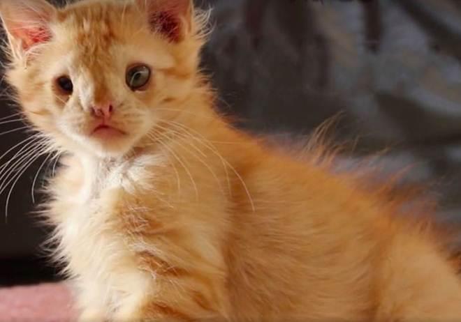 """Depois de ser chamado de """"muito feio"""", este gato que nasceu com uma deficiência encontrou um lar"""