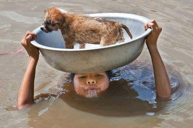 Foto de garoto salvando um cachorro de afogar-se irá te lembrar porque lutar pelos animais é tão importante
