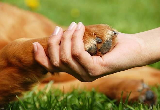 Projeto prevê que animais de estimação possam ser enterrados juntos dos tutores em Goiânia, GO