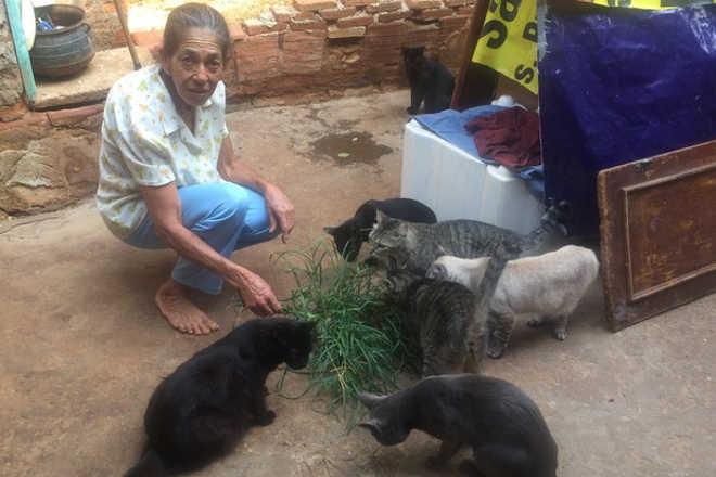 Campanha quer ajudar faxineira que cuida de 52 gatos em Goiânia, GO