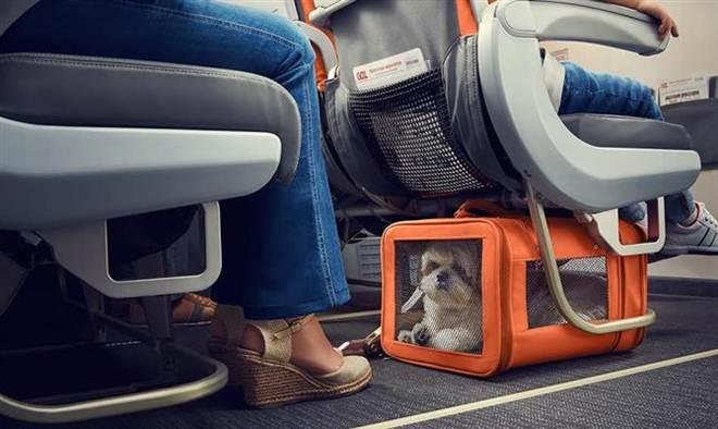 Gol libera transporte de animais em voos internacionais