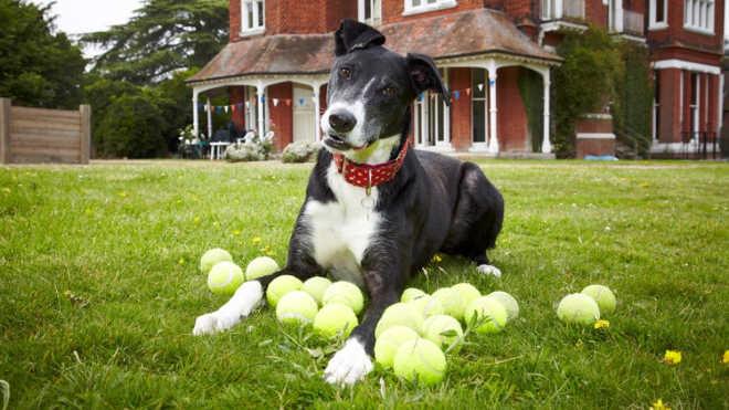 'Cão mais solitário do Reino Unido' finalmente é adotado após mais de mil dias em abrigo