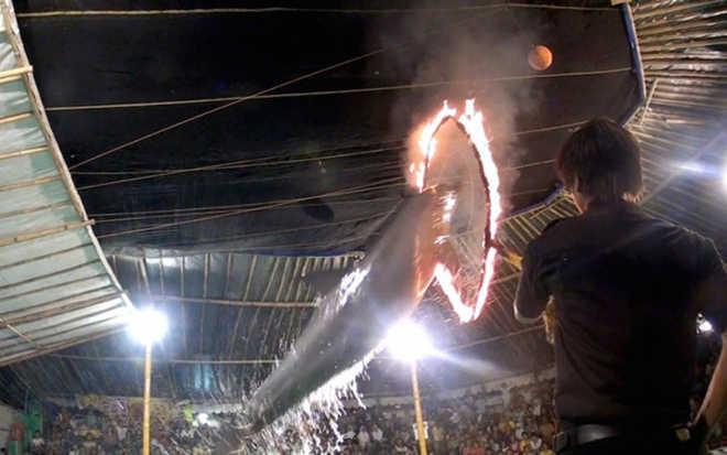 Vamos fechar o ridículo circo itinerante que exibe golfinhos pulando através de aros em chamas