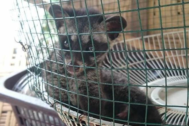 Turistas encontram 'gato' deixado em uma gaiola em uma pilha de lixo – e ajudam a salvá-lo