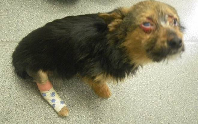 Meninos queimam, torturam e fazem cãozinho comer drogas. Até que ele é resgatado e reencontra seus tutores