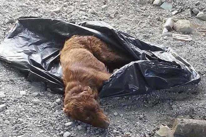 Cão é encontrado amarrado num saco de lixo. O que essa mulher faz? Incrível!