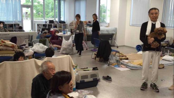 Veterinário pressiona para que abrigos possam manter animais de estimação e seus tutores juntos durante desastres no Japão