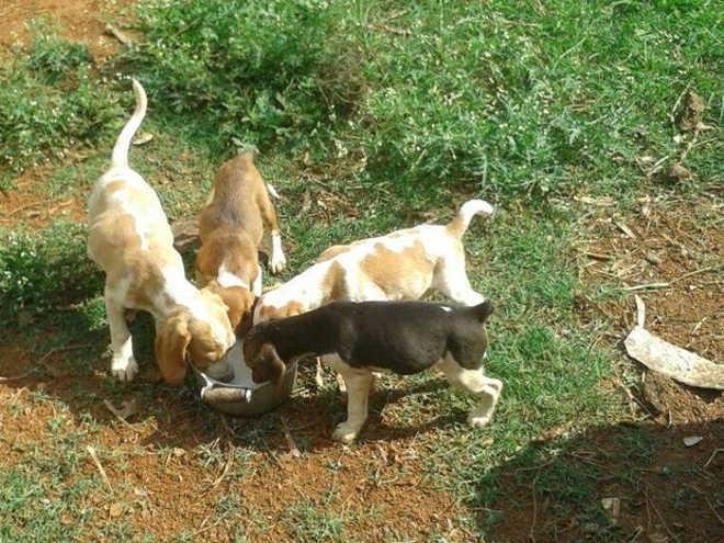 Sequestro e morte de 4 filhotes de cães gera revolta em MG; jovem confessou