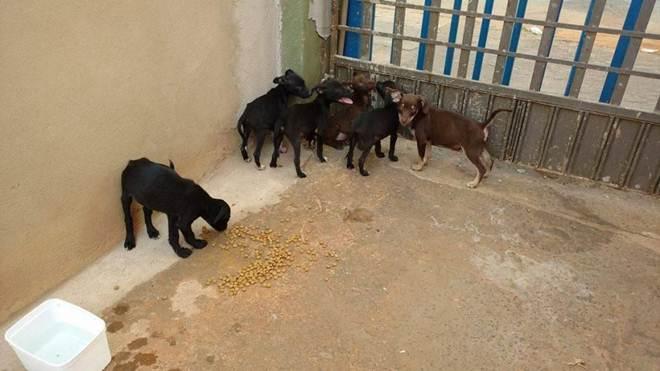 Projeto de Lei declara Grupo dos Amigos dos Animais de utilidade pública em Presidente Olegário, MG