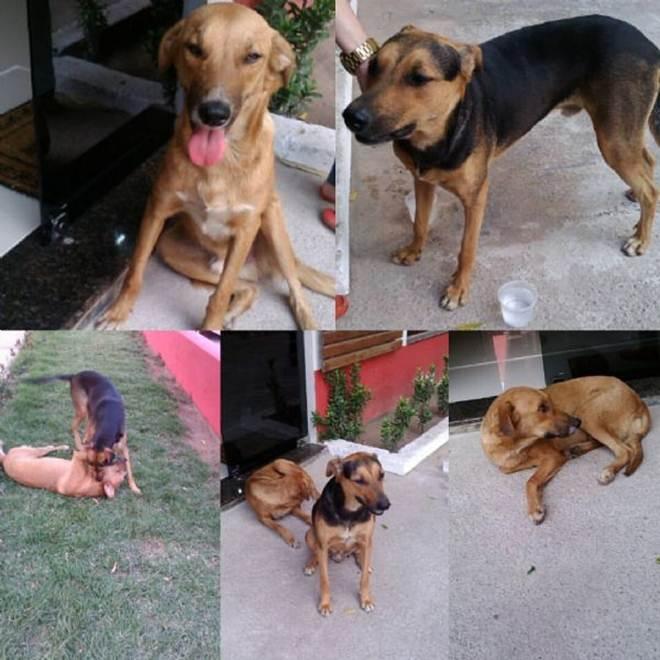 Protetora pede ajuda para manter 28 cães e continuar resgatando animais debilitados em Cuiabá, MT