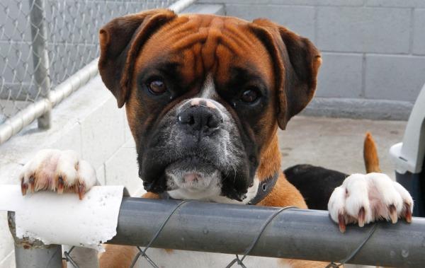 Nova Zelândia reconhece legalmente os animais como seres sencientes