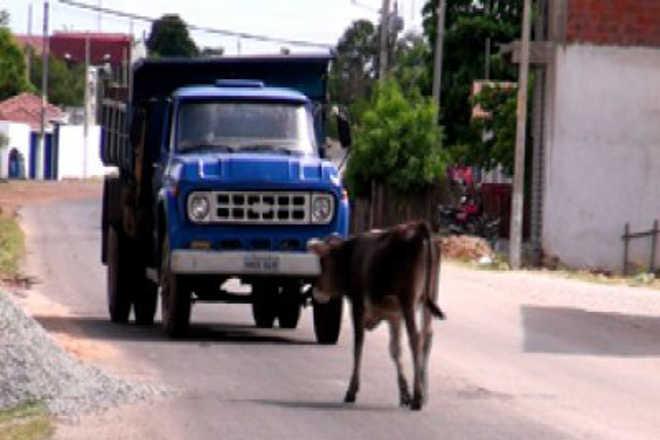 MP quer que Prefeitura adote medidas contra abandono de animais em Araruna, PB