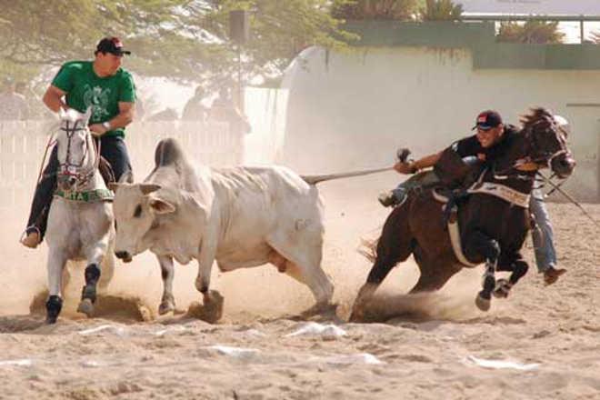 Defensora dos animais pede cancelamento de vaquejada em Campina Grande, PB