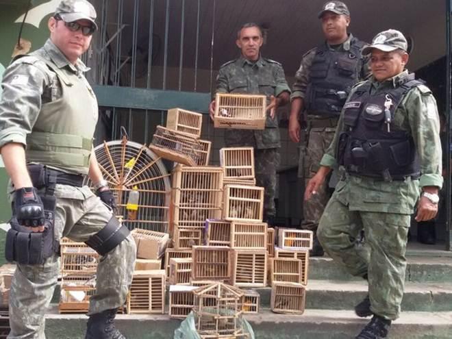PM flagra venda de animais silvestres e 84 pássaros são resgatados no PI