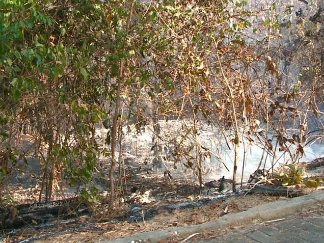 Incêndio no Parque Zoobotânico no PI causa preocupação com animais