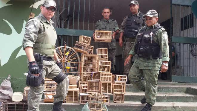 Polícia Militar apreende 84 pássaros que seriam comercializados em Teresina, PI