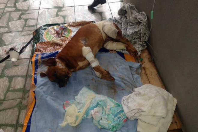 Mulher salva cão ferido com várias facadas em Apucarana, PR