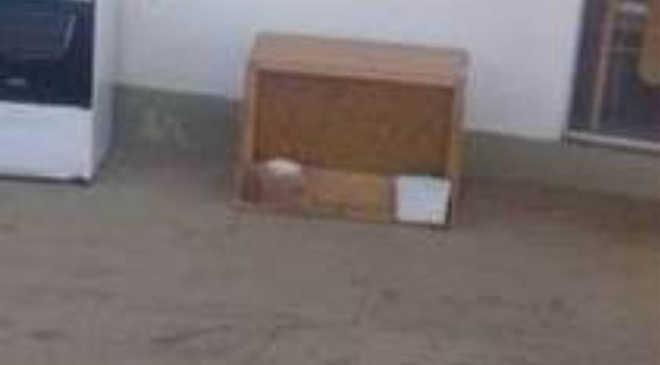 Homem rouba casinha que servia de abrigo para animais abandonados em Foz do Iguaçu, PR
