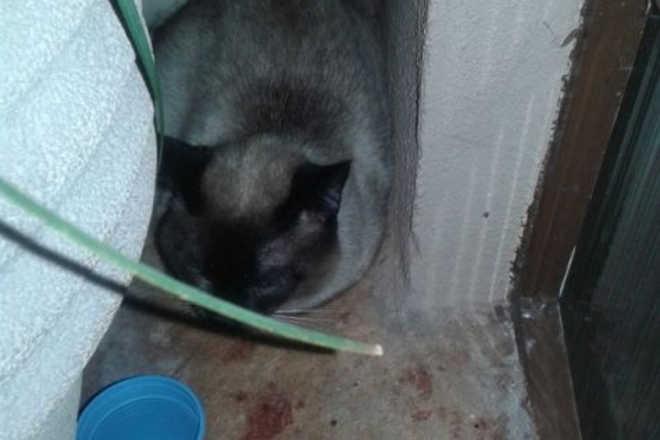 Gato atropelado é encontrado na região do Pq. Verde, em Cascavel, PR