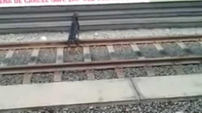 Mulher se arrisca para salvar cão que estava nos trilhos do metrô no Peru