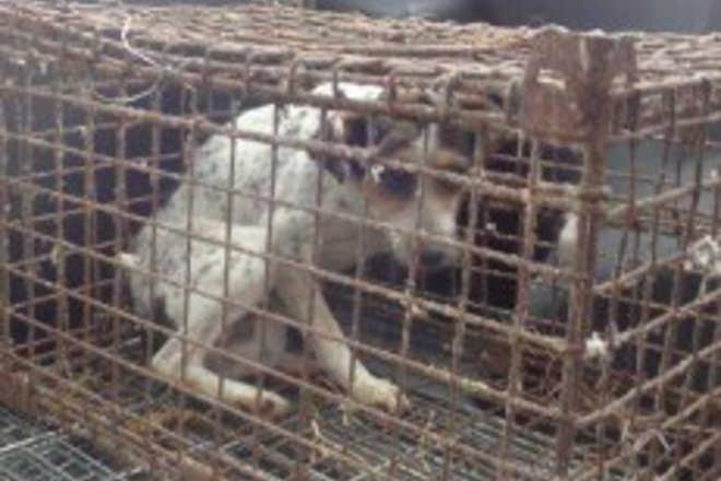 Cadela que vivia em jaula reaprende a andar após ser libertada; vídeo