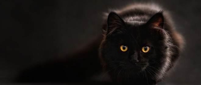Portugal: Tutora de animal usado na Queima do Gato é julgada hoje