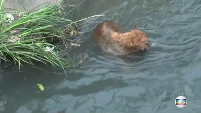 Cachorro é jogado em canal em Niterói, RJ; veja imagens do resgate