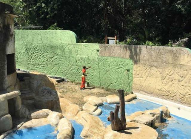 Liminar que suspende licitação do zoológico do Rio põe animais em risco, diz concessionária