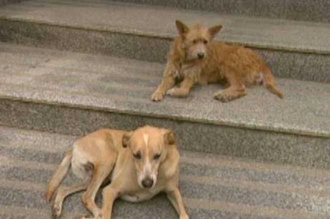 Cães de guarda: delegacia do RJ adota casal de vira-latas
