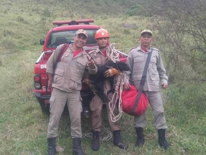 Bombeiros fazem rapel para resgatar cão que caiu de pedreira em Sapucaia, RJ